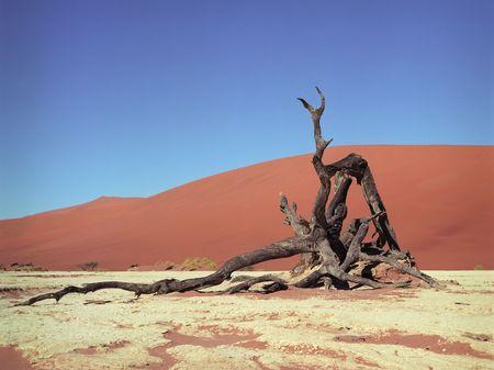 Panoramic view on desert in national park of Namibia 版權商用圖片