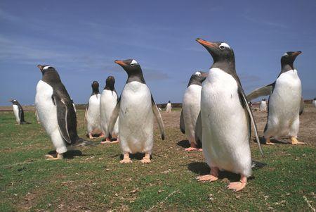 フォークランド諸島会議ペンギン