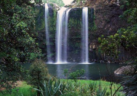 Whangarei Falls Whangarei Northland North Island New Zealand 版權商用圖片
