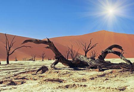 namib: Panoramic view on Namib desert