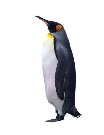 クリッピング パスを白で隔離される皇帝ペンギン 写真素材