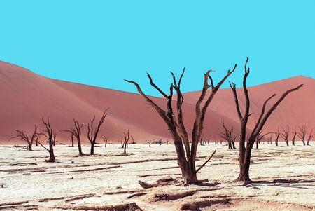 namib: Died trees on Namib desert, Sossuslvei, Namibia