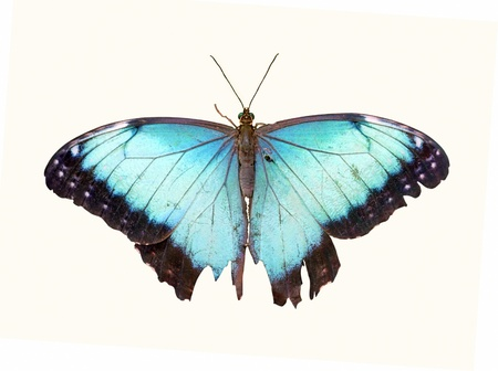白の蝶分離 写真素材