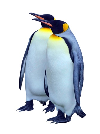 Two emperor penguins 版權商用圖片