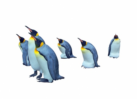 penguin colony: Emperor penguins isolated on white with clipping path