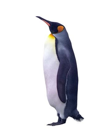白で隔離される皇帝ペンギン