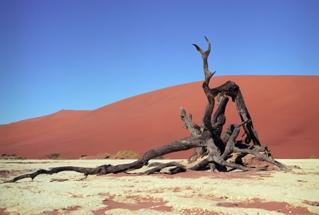 Panoramic view to Namib desert with died tree photo
