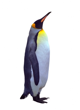 penguins: Emperor penguin isolated over white