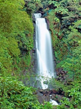 Jungle famous Trafalgar falls in Dominica island 版權商用圖片