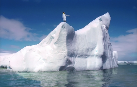 King penguin on melting iceberg Antactica photo