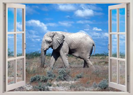 cielos abiertos: ventana de vista abierta al elefante africano en la sabana Foto de archivo