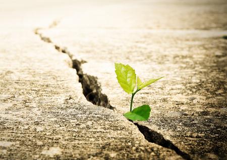 Planta crece en la calle, el concepto de la ecología Foto de archivo - 64626357
