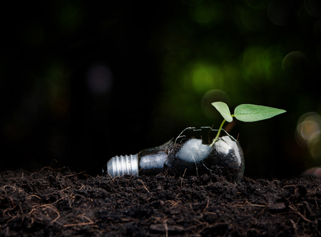 business idea: Plant growing in light bulb , ecology ,business concept