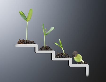 plant growing: Plant on staircase , growth , development concept Stock Photo
