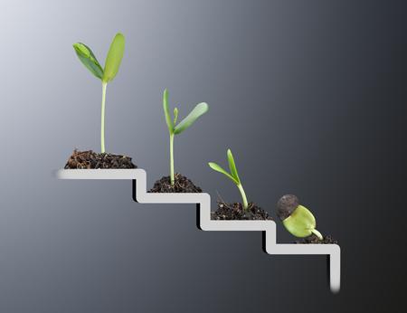 semilla: Planta en la escalera, el crecimiento, el concepto de desarrollo