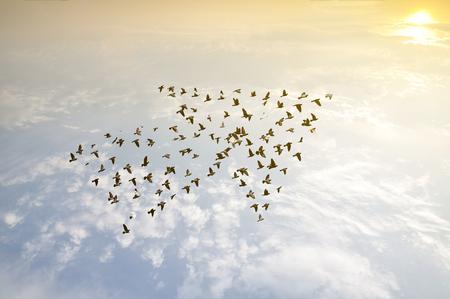 crecimiento: Los pájaros en el cielo, el concepto de desarrollo de crecimiento Foto de archivo