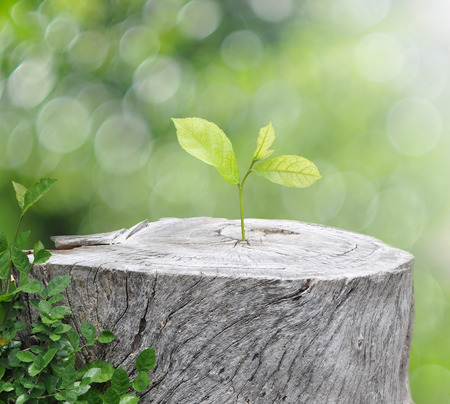 Plant growing on timber on green bokeh background