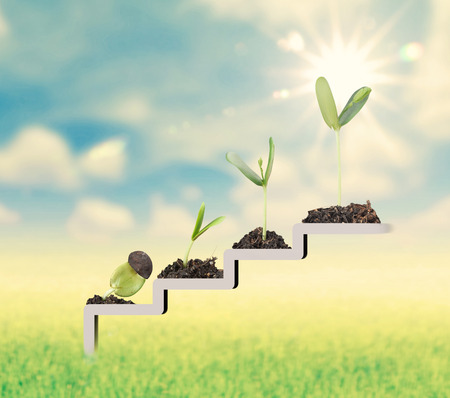 Plant on staircase , growth , development concept Stock Photo