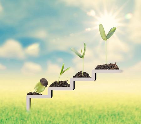 Planta en la escalera, el crecimiento, el concepto de desarrollo Foto de archivo - 50212807