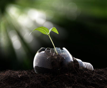 Plant growing in light bulb , ecology ,business concept