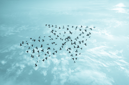Birds on sky , growth and develop concept