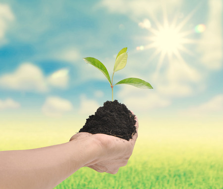 plant nature: Hand holding plant on nature background , ecology concept Stock Photo