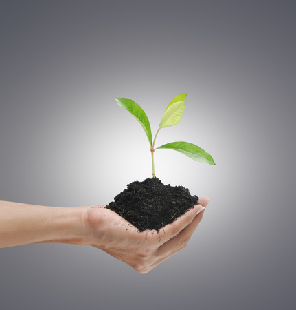 Plant on hand on gray and light background
