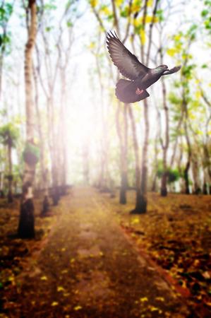 背景のウッドランドを飛んでいる鳥