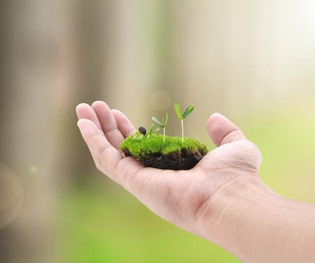 responsabilidad: Pequeña planta en la mano
