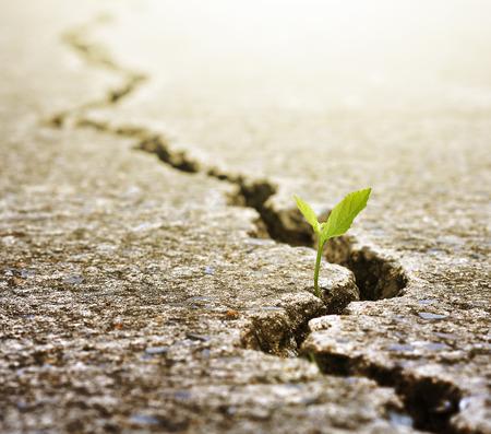 Planta crece en la calle, el concepto de la ecología Foto de archivo - 50212889
