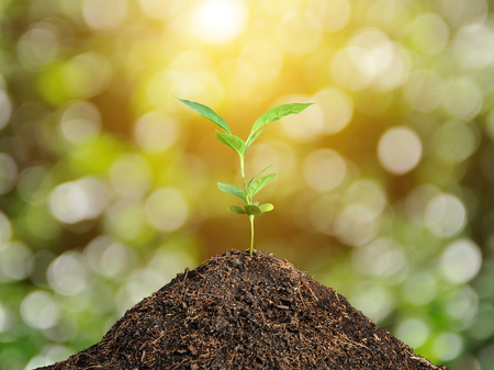 Plant grow and bokeh background , concept