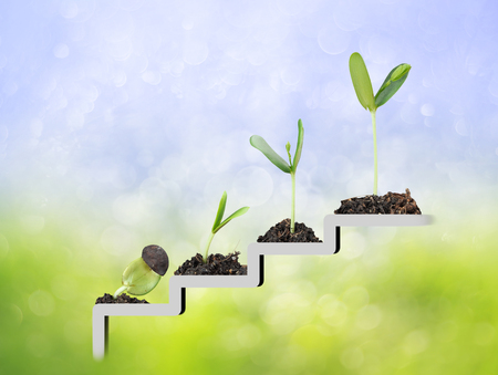 financial symbols: Plant on staircase , growth , development concept Stock Photo