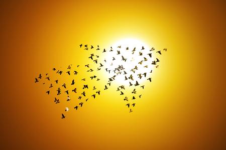 Birds with sunrise , growth development concept