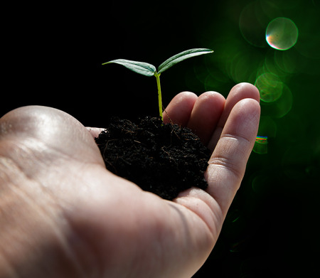 plant hand: Hand holding plant on bokeh background , Ecology concept Stock Photo