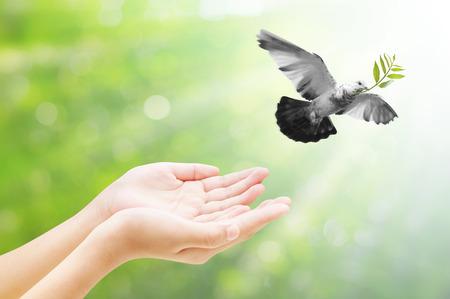 libertad: Mano liberaci�n de un p�jaro en el aire, todo el concepto, la belleza, la libertad, la paz, la espiritualidad Foto de archivo