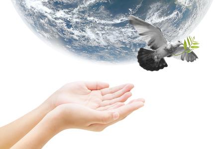 Pájaro Mano y la tierra, el concepto de fondo, los elementos de la imagen son proporcionados por la NASA Foto de archivo - 50212932