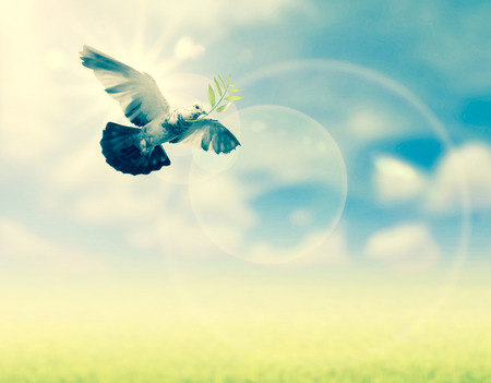 releasing: Hand releasing a bird into the air , all concept , peace and spirituality