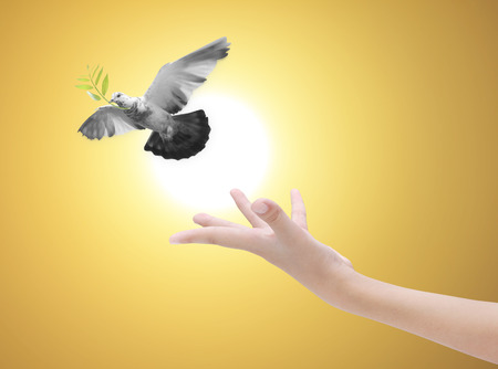freedom concept: Hand releasing a bird into the air , all concept , beauty ,freedom,peace ,spirituality