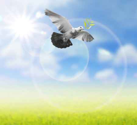 holy god: Bird into the air , all concept , peace and spirituality