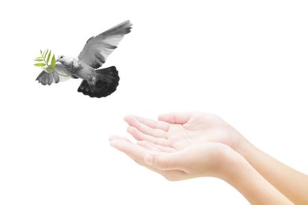La liberación de la mano de un pájaro en el aire, todo el concepto, la paz y la espiritualidad Foto de archivo - 50213051