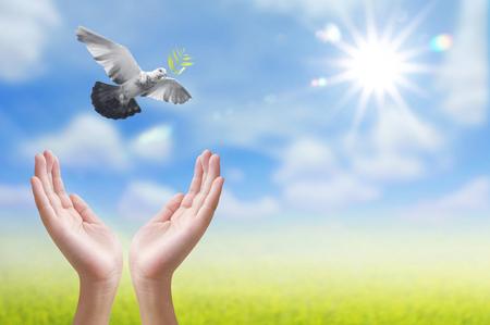Hand vrijgeven van een vogel in de lucht, conceptontwerp Stockfoto