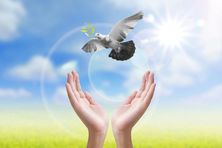 paloma de la paz: La liberaci�n de la mano de un p�jaro en el aire, todo el concepto, la paz y la espiritualidad