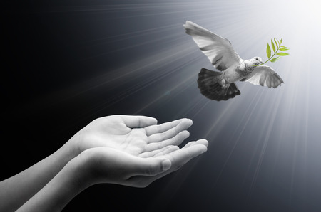 Hand releasing a bird into the air , all concept , peace and spirituality