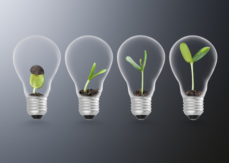 Plant growing in lightbulb , ecology ideas growth concept 스톡 콘텐츠