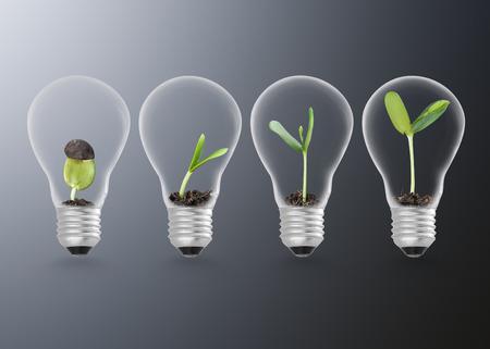 Plant in gloeilamp, ecologie ideeën groei concept Stockfoto - 50213125