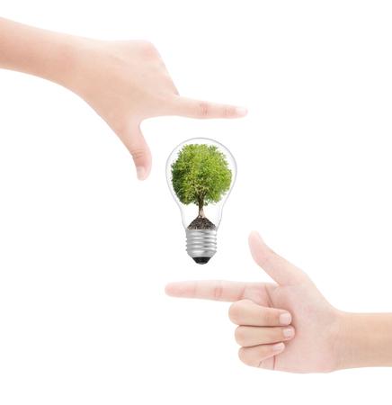 Hands framing   tree in  lightbulb on white background
