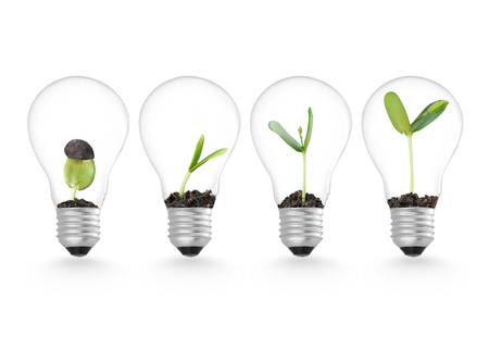 team ideas: Plant growing in lightbulb , ecology ideas growth concept Stock Photo