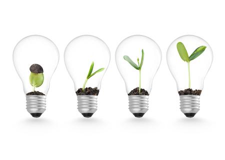 Plant in gloeilamp, ecologie ideeën groei concept Stockfoto - 50213182