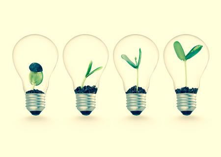 crecimiento: Planta que crece en bombilla, ideas de la ecología del concepto del crecimiento