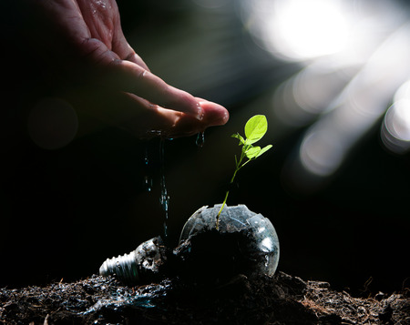 Hand watering to small plant in the morning Stock Photo